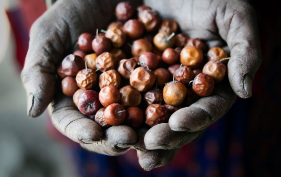 Woman holding Boar fruits.